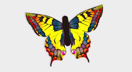 Schmetterlingsdrachen HQ