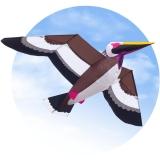 Pelican 3D