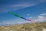 Fransenschwanz Rainbow